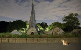 プロ撮影の可愛い猫の写真をポストカード3枚組でお届けします