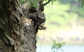 猫たちのポストカード5枚組&公園での給餌体験(希望者のみ)