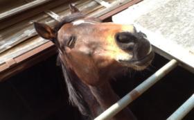【養老馬の飼養を全力応援!】
