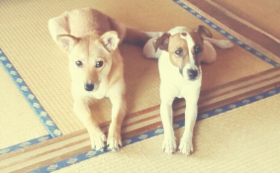 【犬楽園チームメンバーが大放出】犬OK民泊、宿泊券!