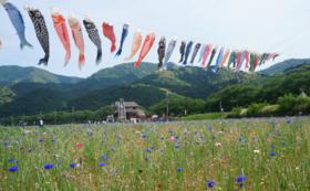 【遠方に住んでいて来場できない方へ】松崎町特産品セットをお届けします!
