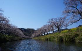 【花見舟乗船券】「田んぼをつかった花畑+桜」見頃の時期におすすめ!