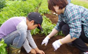 ▼有機JAS・カレー野菜セット現地収穫体験権 +スパイス【4~5食分】+米5kg▼
