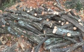 〜私たちが栽培したマルハチ椎茸500g+お米10kg+公式HPに名前もしくは企業名掲載〜
