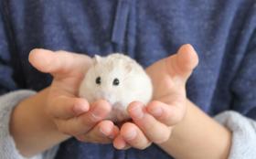 【全力応援コース】動物業界に携わりたい高校生の一歩を踏み出すきっかけを作りましょう!