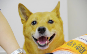 【先行権】補助犬の未来に向けてご支援いただいたあなたにいち早くCDをお届け
