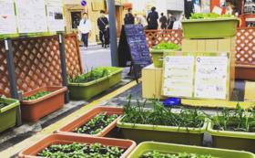 あなたの街で半日ベジタ(野菜収穫イベント)を開催!