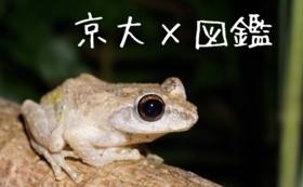 【好きな種を応援!】図鑑チケットコース