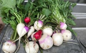 地元野菜で作った無添加ジャム 2個