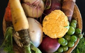 地元野菜で作った無添加ジャムと採れたて野菜の詰め合わせ