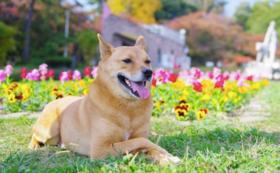 【先行権】補助犬の未来に向けてご支援いただいたあなたにいち早くDVDをお届け