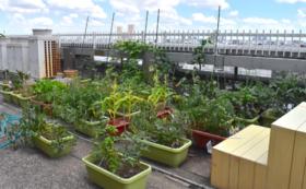 【夏休みに】こちらのゾーンの屋上菜園で収穫体験!コース