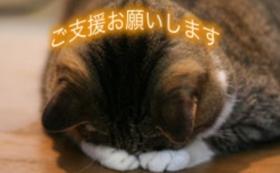 【10,000円】猫に居心地の良いホテルを提供するために!