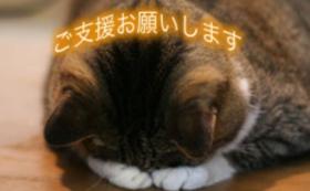 【50,000円】猫に居心地の良いホテルを提供するために!