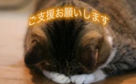 【30,000円】猫に居心地の良いホテルを提供するために!