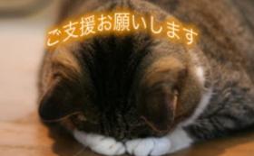 【100,000円】猫に居心地の良いホテルを提供するために!