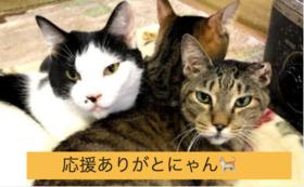 【この取り組みを全力応援コース】猫たちの写真