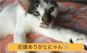 【この取り組みを全力応援コース】保護猫シェルターの経過報告
