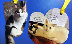 保護猫シェルターの経過報告、ハープのCD、 コースター、 しおりとメモ用紙