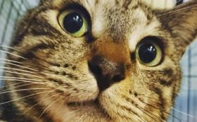 猫たちの未来を全力で応援