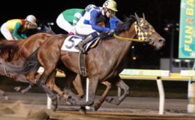 【限定8名】購入した馬の使用済蹄鉄と馬主風バッジ(ゴールド)