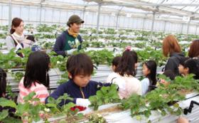 【団体さま向け】イチゴ園貸し切り案内ツアー