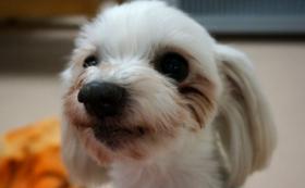 保護犬が安心して暮らせるご支援を!