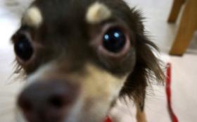 保護犬の支援と命名をお願いします!