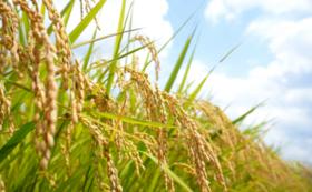 【文化財の保護サポーターコース】特別農家栽培限定米「つや姫」5kg
