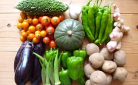【大子町の名産品で応援!】季節の有機野菜セット-2(春・夏 2便)