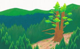 「浄安くわは」の絵本と原画(「浄安杉」)