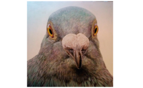 "[910x920mm] pigeon ""look"""