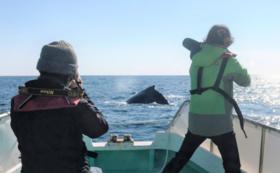【八丈島ザトウクジラ調査隊員コース】調査の最新情報を密着フォロー