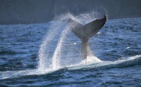 【研究室とミュージアムでクジラの生態系に触れる】