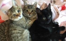 複数の猫にノミ・ダニ他の駆除投薬・ワクチン接種・不妊手術を施せます。