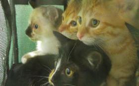 岐阜の猫たちから、すべての猫にできることをし続けます!