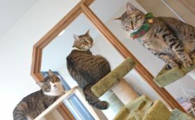 猫たちへ全額支援コース
