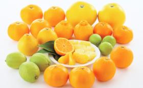 【青いレモンの島いわぎ】柑橘類の詰合せ