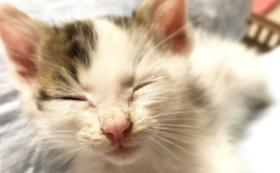 【犬猫大好きな方へ】保護猫カフェで猫ちゃんと触れ合う&愛犬・愛猫との相性診断