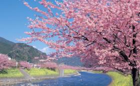 【学生限定】お花見バーベキュープロデュース権