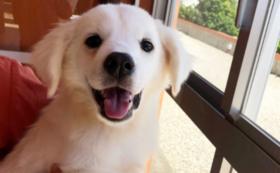 【全力応援】宮古島の犬猫たちも幸せになれるように。