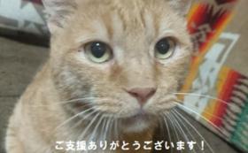 「のら猫クリニック兵庫」全力応援コース
