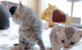 猫達の未来を全力で応援