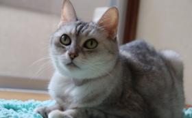 保護猫カフェの3ヶ月間無料パスポート