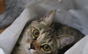 保護猫カフェの半年無料パスポート