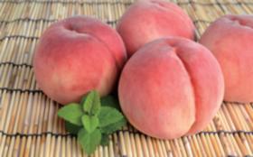 「朝獲り完熟桃」+ぶどう畑にお名前の刻印