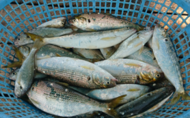 【遠方の方向け】漁師のおまかせ海産物コース