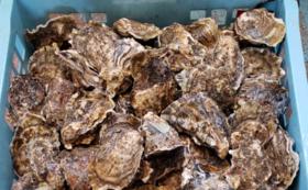 【お友達やご家族と一緒に】厚岸産の生牡蠣50個付