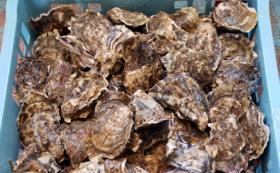 【パーティーコース】厚岸産の生牡蠣100個付