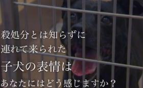 動物愛護支援コース